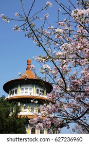 Sakura blossom with temple building