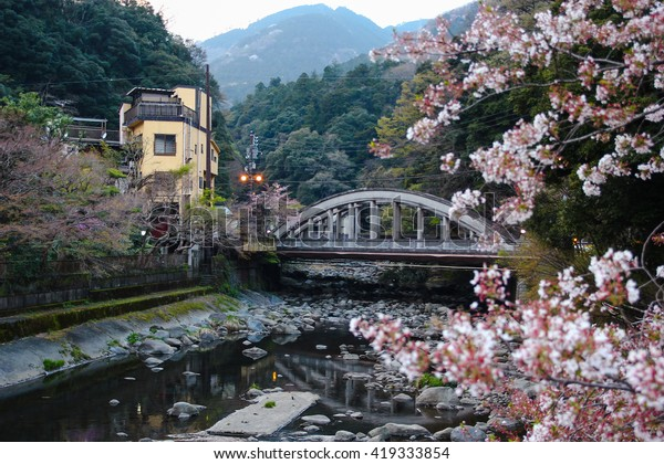 """Sakura"" or cherry blossom falling on stream with train bridge behind at ""Hakone Yomoto"" ""Hakone station"" in Japan."