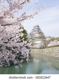 Sakura cherry blossoms and a UNESCO World Heritage castle in Japan