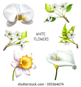 Sakura cherry tree blossom with green leaves on a branch, Daffodil flower or narcissus, calla flower,  illustration isolated on white background