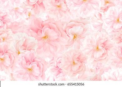 Sakura flower blossoms background. Floral print texture