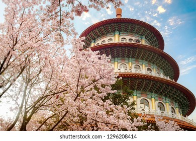 THe Sakura Flower or Cherry Blossom With Beautiful Nature Background