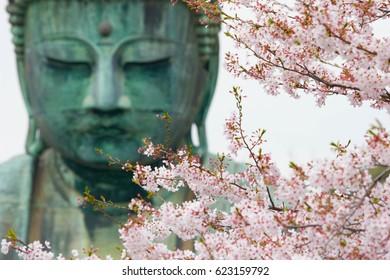 Sakura flowers (cherry blossoms) with blurred background of Big Buddha or Great Buddha of Kamakura (Daibutsu) in the Kotoku-in temple - Kamakura, Kanagawa, Japan.