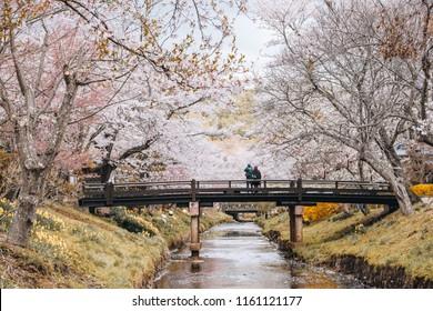 the sakura full bloom festival in Oshino hakkai, Yamanashi Japan.