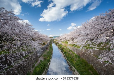 Sakura trees along the cannel with blue sky at Yamasaki, Nagoya Japan. It is great place for sakura sight seeing