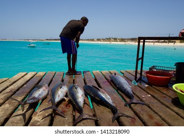 SAL ISLAND, CAPE VERDE - APRIL 2019: portrait of five big tuna fishes lying down on the wooden pier of Santa Maria in Sal island, Cape Verde