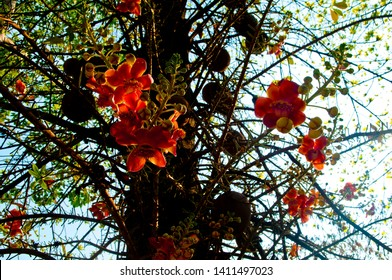 Sala flower is a tree in Buddhism.