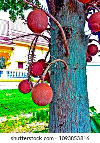 Sala tree or Sala fruits or Sala flowers. This fruits is in india and involve with Buddha.