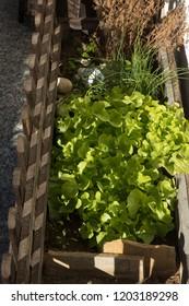 Salad in the balcony box