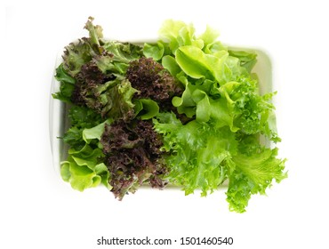 Salad leaf. Lettuce in food box isolated on white background., Fresh and green lettuce, Salad background for inserting text