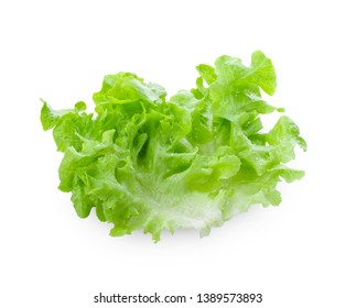 Salad leaf. Lettuce isolated on white background. full depth of field