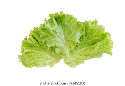Salad leaf. Lettuce isolated on white background. with clipping path
