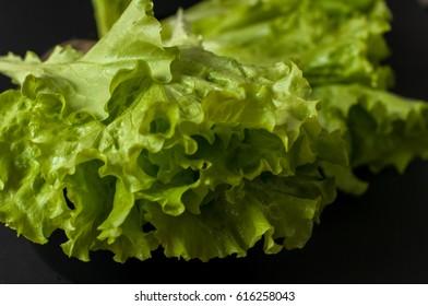 Salad leaf. Lettuce on black background.