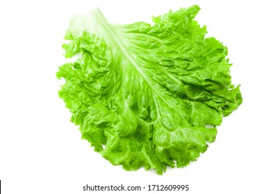 Salad leaf. One green lettuce isolated on white background.