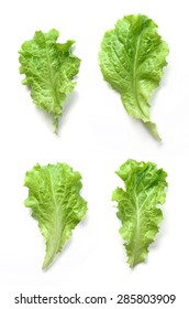 Salad Leaves Isolated on White