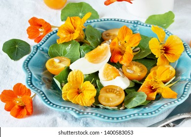 salad with nasturtium leaves and flowers of the plant. bright summer salad with edible yellow flowers and yellow tomatoes with egg, sunflower seeds and seasoned with olive oil. Wild Food Concept