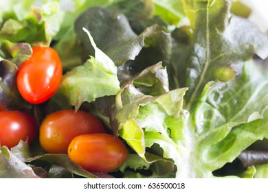 Salad with tomato