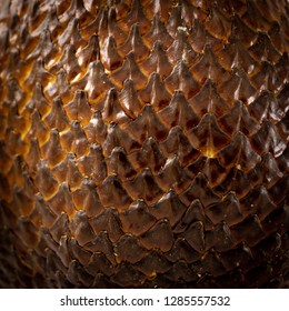 salak fruit texture and pattern skin. brown color