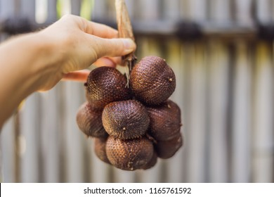 Salak in hands,Thai and Indonesian local fruits.