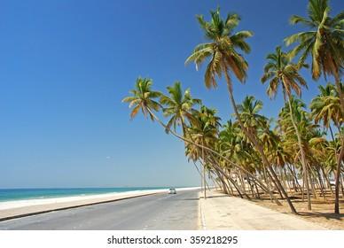 Salalah coast, Oman, Asia, Arabian Peninsula