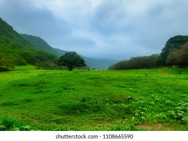 Salalah oman Nature