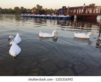 Salam Park in Riyadh, Saudi Arabia with four duck in the lake view.