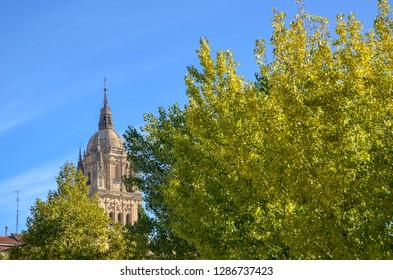 Salamanca Cathedral and autumn leaves, Salamanca, Spain