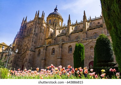 Salamanca's Cathedral Nueva(New Cathedral)  with spring tulips as foreground.