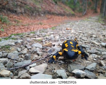 salamander in forest on the road