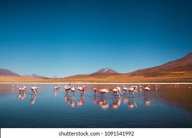 Salar de Uyuni is salt flat in Bolivia, South America