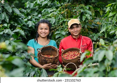 SALAVAN,LAO P D R - NOVEMBER 7,2014 ; Unidentified lavan ethnic coffee farmers are smiling for photo with coffee berries in baskets at vangyawn village,Lao Ngam,Salavan, Lao p d r