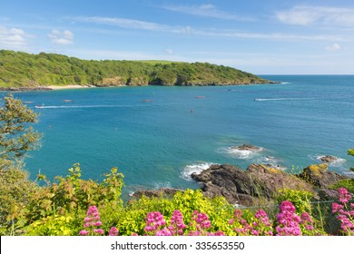 Salcombe Devon England UK coast view with pilot gig racing blue sea and sky and pink flowers