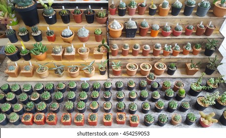 Sale of cactuses of various grades in the Flower market