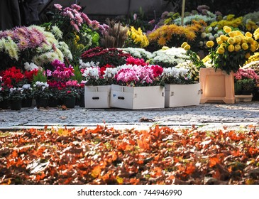 sale of colorful flowers outside a cemetery to commemorate the deceased, on the feast that the Catholic Church celebrates on November 2 Th of each year