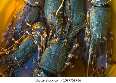 Sale of lobsters in the markets of different cities of Goa and other states of India