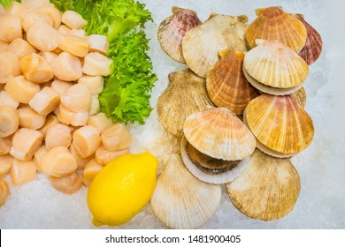 Sale of seafood. Fresh scallops on the ice. Raw seafood. Gifts of the sea. Scallops cleaned and untreated on ice. Showcase fish store.