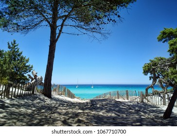 Saleccia Beach, Corsica. Caribbean Beach. Agriates Desert. The Famous Pathway to the Sea. Blue Sky. White sand. Pine Trees. Vegetation. Landscape. Summer Daylight. Small boat on background