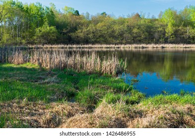 salem hills woodlands and pond surrounded by marsh and reeds in inver grove heights minnesota