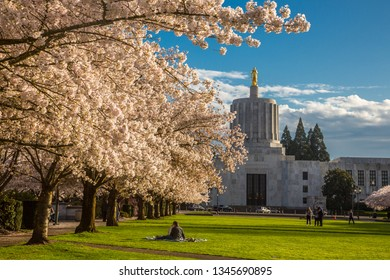 Salem, Oregon - 3/18/2016:  Families enjoying a warm spring day amound the cherry blossoms on the mall in front of the Oregon State Capitol building, Salem