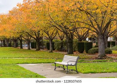 Salem Oregon State Capitol Park, Colorful Autumn Trees, and Park Bench.