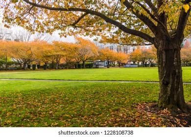 Salem Oregon State Capitol Park, Colorful Autumn Trees.