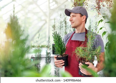 Salesman in the greenhouse holding young pine trees in pots
