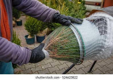 Salesman packing up a christmas tree for transportation
