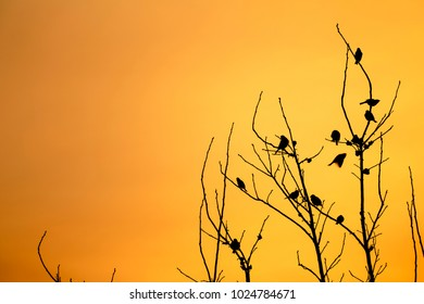 Salida del sol con pájaros