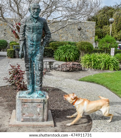 Salinas, California - February 27, 2015: A ferocious, vicious, crazy, ornery, mad dog (yellow Labrador retriever) barks and growls at a bronze statue of John Steinbeck,  at front of Steinbeck Library.
