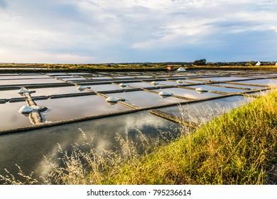 Saline field in guerande bretagne