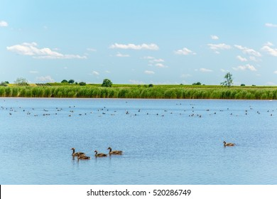 a saline lake situated next to the neusiedlersee in Burgenland, Austria.