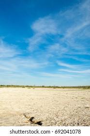 Saline steppe. Dead plants. Hot summer. lifeless scorched earth. bare steppe of Kazakhstan