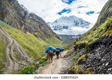 Salkantaypampa trail during the trekking of Salkantay the Road to Machu Picchu with Soirococha Mountain in the background