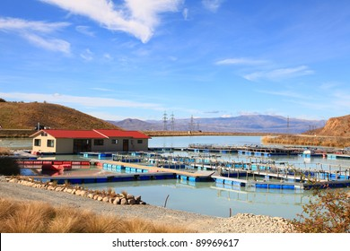 Salmon Farm at New Zealand for agriculture Concept